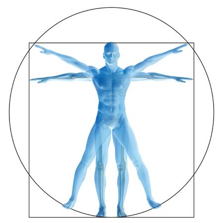Vitruvian Menschen oder der Mensch als ein Konzept oder konzeptionelle 3D Anteil Anatomie Körper isoliert auf Hintergrund