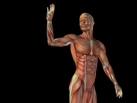 upper arm: Conceptual human body anatomy isolated on black background Stock Photo