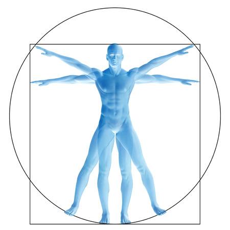 Vitruvian mens of de mens als een concept of conceptueel 3d aandeel anatomie geïsoleerd op achtergrond Stockfoto