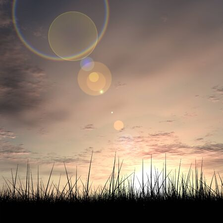 freedom: Black abstract grass over sky sunset background