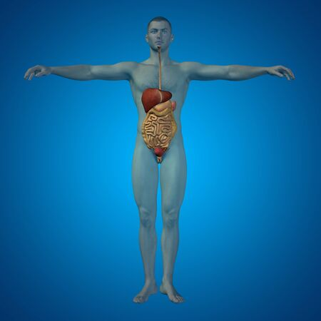 esophagus: Conceptual anatomical human or man 3D digestive system on blue background