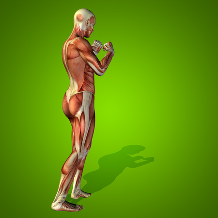 anatomically: Conceptual 3D human man health anatomy on green background Stock Photo