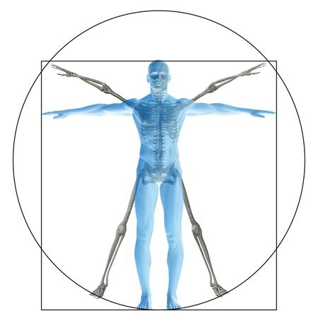 corpo umano: Umano vitruviano o l'uomo come un concetto o concettuale corpo 3D proporzione anatomia isolato su sfondo Archivio Fotografico