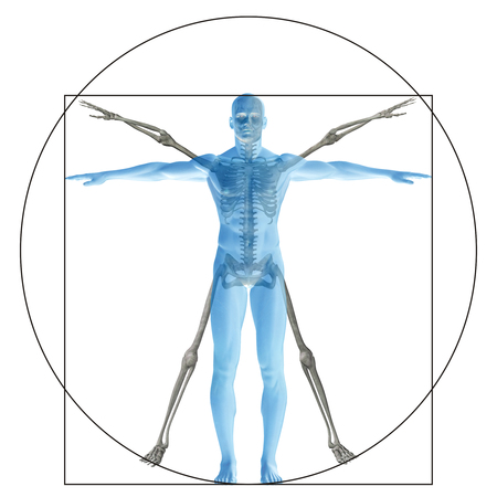 body image: Vitruvian human or man as a concept or conceptual 3d proportion anatomy body isolated on background
