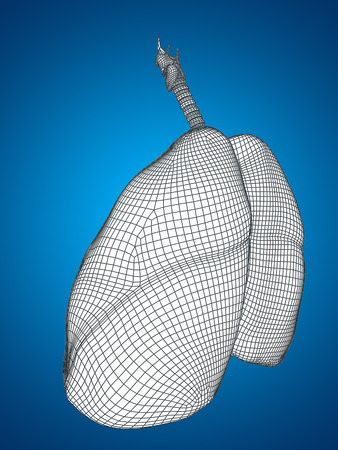 anatomical: Conceptual anatomical human man 3D wireframe mesh respiratory system  with lungs