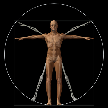 uomo vitruviano: Umano vitruviano o l'uomo come un concetto o concettuale corpo 3D proporzione anatomia isolato su sfondo Archivio Fotografico
