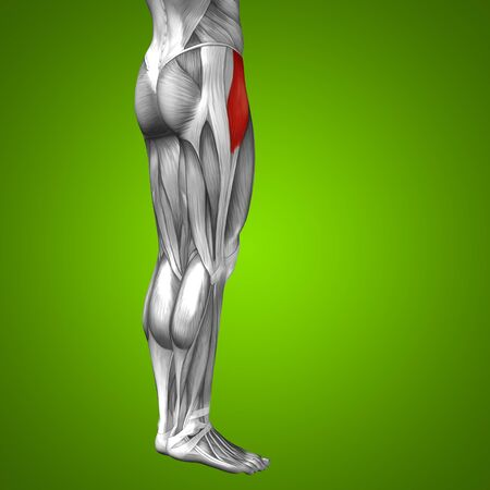 ścięgno: Koncepcyjne 3D anatomii ludzkiego przednia górna mięśni nóg na zielonym tle