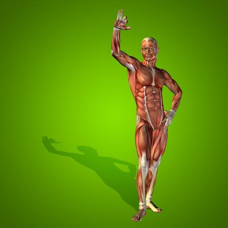 anatomic: Conceptual 3D human man health anatomy on green background Stock Photo