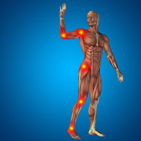muscle: Conceptual cuerpo dolor en las articulaciones hombre anatomía humana en 3D sobre fondo azul