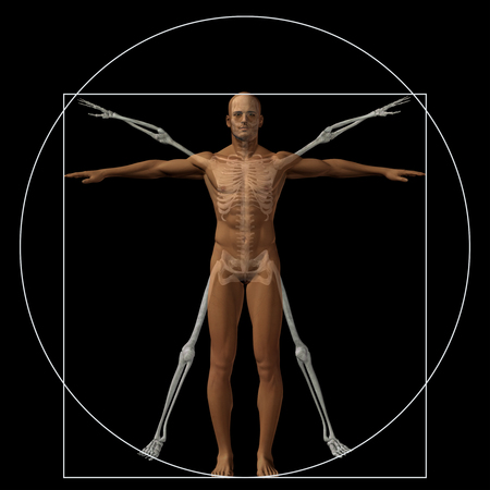 x stand: Vitruvian human or man as a concept or conceptual 3d proportion anatomy body isolated on background