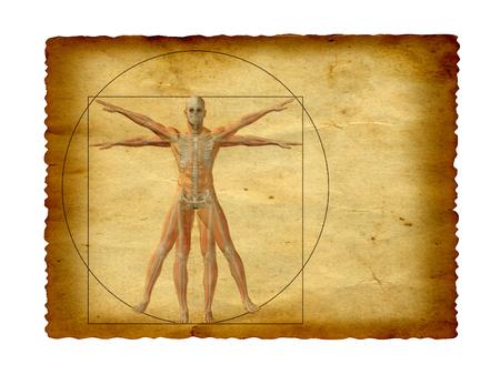 cuerpo hombre: Concepto o dibujo cuerpo humano Vitruvio conceptual sobre fondo de papel viejo