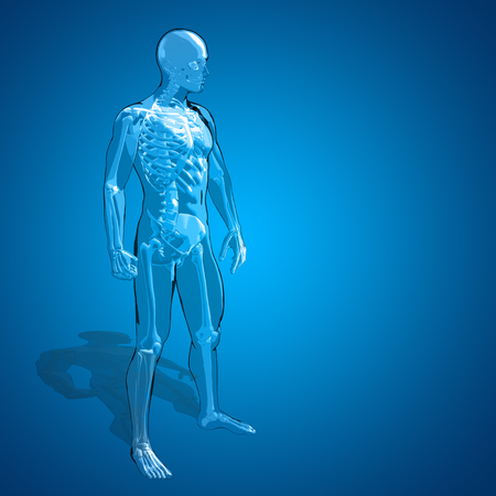 transparent body: Conceptual 3D human man or male skeleton anatomy transparent body over blue gradient background