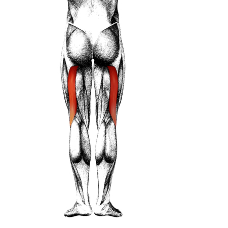 Conceptual 3D Delante Humana Pierna Superior Anatomía Muscular ...