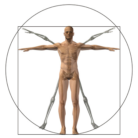 proportion: Vitruvian human or man as a concept or conceptual 3d proportion anatomy body isolated on background