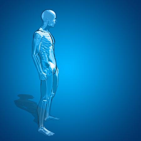 Conceptual 3d Human Man Or Male Skeleton Anatomy Transparent Stock