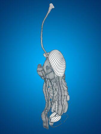 higado humano: Sistema conceptual humano u hombre wireframe 3D anatómica digestivo sobre fondo azul Foto de archivo