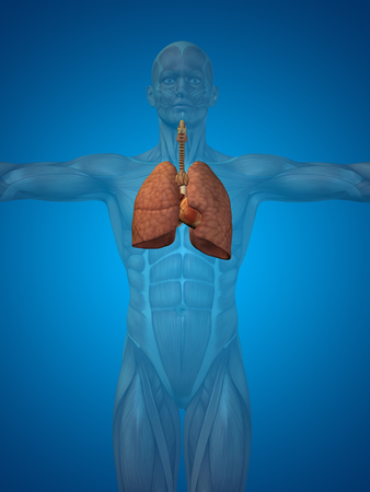 chest x ray: Conceptual anatomical human or man 3D respiratory system on blue background