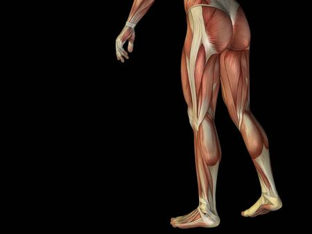 arm muscles: Conceptual human body anatomy isolated on black background Stock Photo