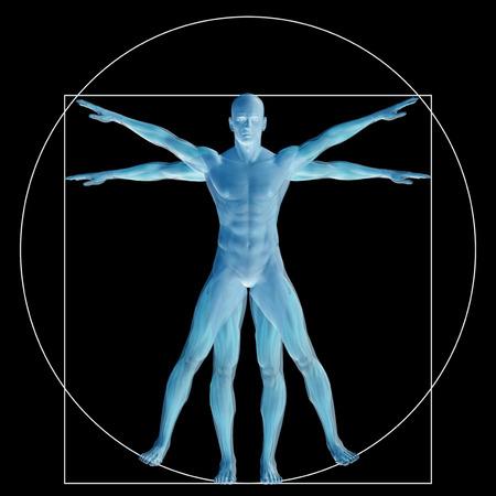 Vitruvian Menschen oder der Mensch als ein Konzept oder konzeptionelle 3D Anteil Anatomie Körper isoliert auf Hintergrund Standard-Bild - 53517974