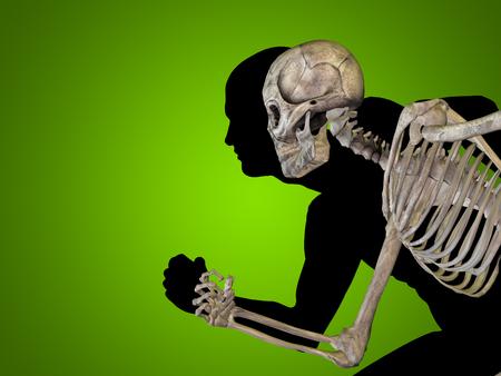 muscular anatomy: Conceptual Anatomy human body on green background