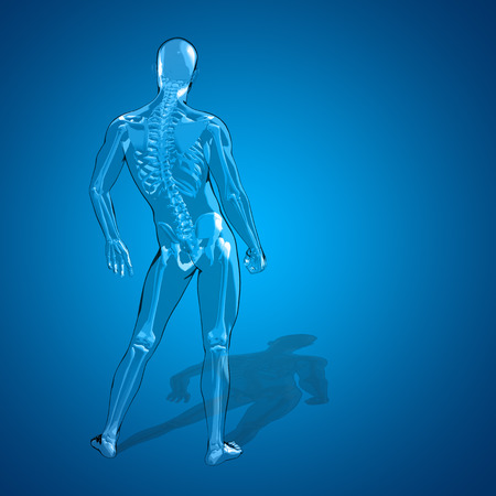 spine x ray: Conceptual 3D human man or male skeleton anatomy transparent body over blue gradient background