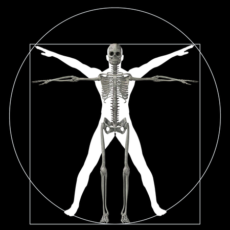x ray image: Vitruvian human or man as a concept or conceptual 3d proportion anatomy body isolated on background