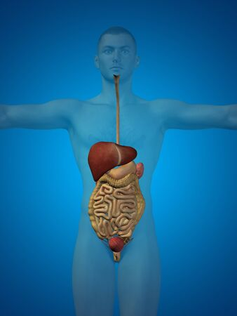 digestive tract: Conceptual anatomical human or man 3D digestive system on blue background