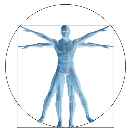 Vitruvian human or man as a concept or conceptual 3d proportion anatomy body isolated on background