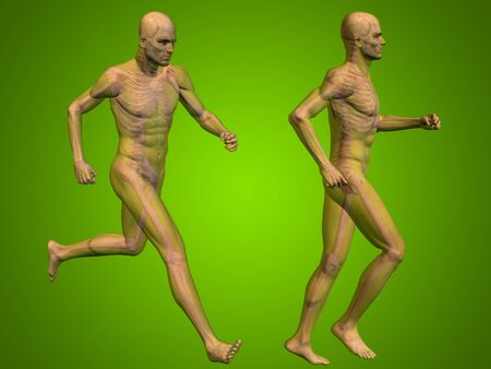 spine x ray: Conceptual man or human 3D anatomy or body on green background