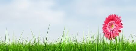 grass flower: Conceptual spring pink flower in green grass background Stock Photo