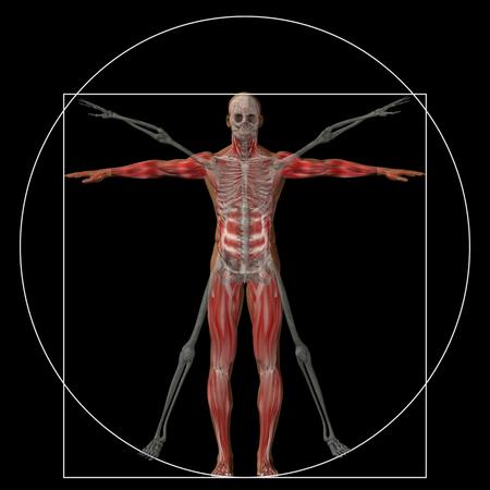 skeleton man: Vitruvian Menschen oder der Mensch als ein Konzept oder konzeptionelle 3D Anteil Anatomie Körper isoliert auf Hintergrund