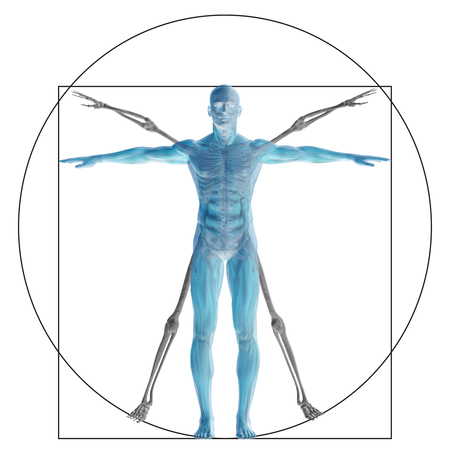 physiology: Vitruvian human or man as a concept or conceptual 3d proportion anatomy body isolated on background