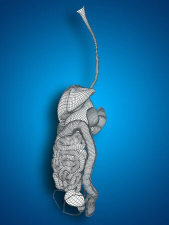 cecum: Conceptual anatomical human or man 3D wireframe digestive system on blue background Stock Photo