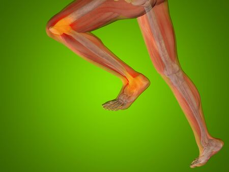 knee cap: Conceptual human body anatomy articular pain on green background