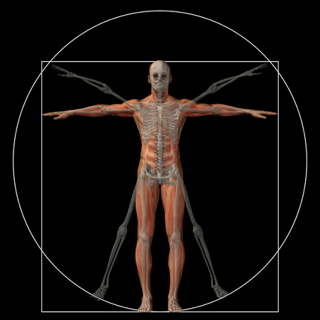 leonardo davinci: Vitruvian human or man as a concept or conceptual 3d proportion anatomy body isolated on background