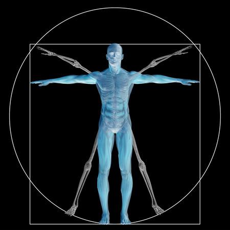 leonardo davinci: Vitruvian human or man as a concept or conceptual 3d proportion anatomy body isolated on background