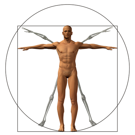 to proportion: Vitruvian human or man as a concept or conceptual 3d proportion anatomy body isolated on background