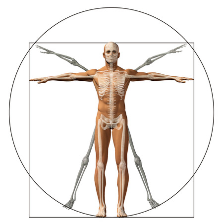 Vitruvian human or man as a concept or conceptual 3d proportion anatomy body isolated on background Reklamní fotografie