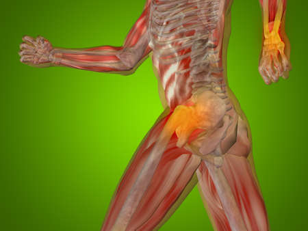 articulation: Conceptual human body anatomy articular pain on green background