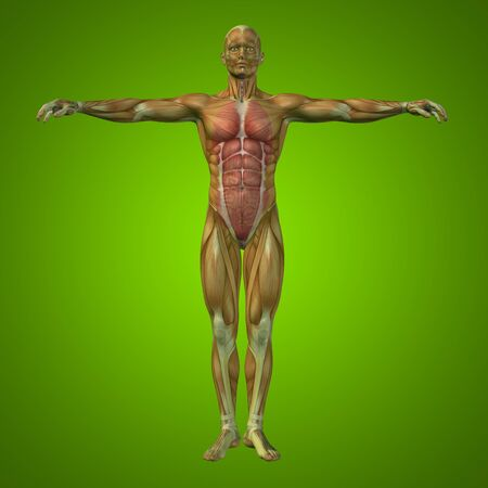 guts: Conceptual 3D man with internal organs, digestive, lungs and circulatory system on green background Stock Photo