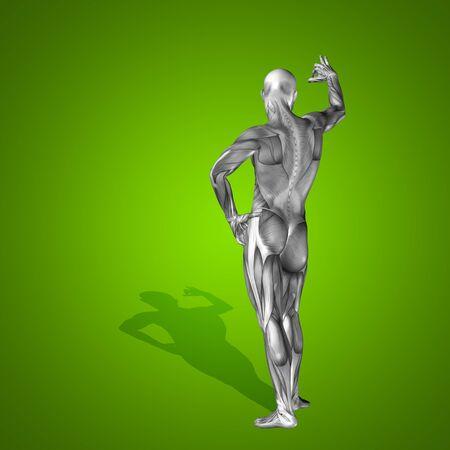 Conceptual 3D human man health anatomy on green background Stock Photo