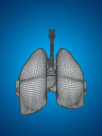 Conceptual anatomical human woman 3D wireframe mesh respiratory system  with lungs Stock Photo