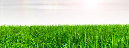 3D概念绿色,新鲜的天然草地或草坪,蓝天背景春夏季横幅
