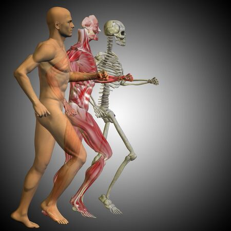 feet naked: Conceptual 3D human man with bones for anatomy, medicine or health, gray background