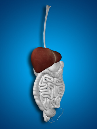 bile: Concept conceptual 3D human man anatomy of digestive system on blue background