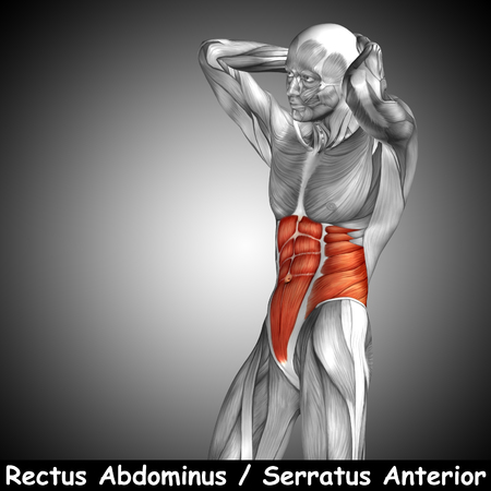 Conceptual 3D chest anatomy muscle and text on gray background Stock Photo