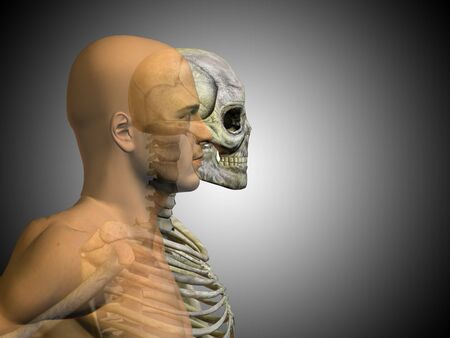 Conceptual Anatomy human body on gray background