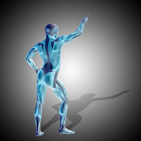Conceptual 3D human man health anatomy on gray background Stock Photo