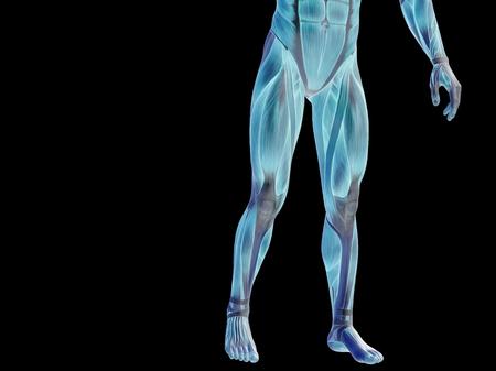 Conceptual human body anatomy isolated on black background Stock Photo