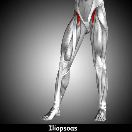 Koncepcyjne 3D człowieka przedniej górnej nogi mięśni anatomicznych i tekst na szarym tle